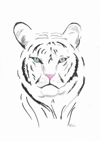Snowy White Tiger