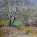 Spring Millhams Mead