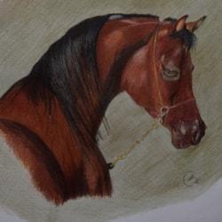 Stallion with brass chain