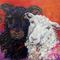 Sue Toft Artist- Sheep Study resized