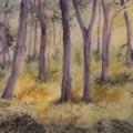 Summer Morning Woods digitsl man 72dpi