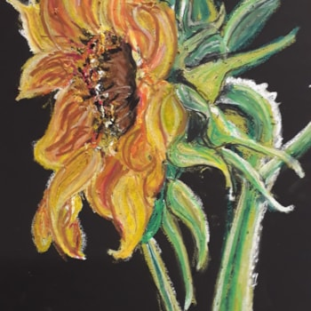 Sunflower - Oil Pastel on Black Canson Mi Tientes Paper - July 29th 2020