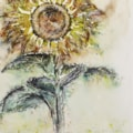 Sunflower '20-3