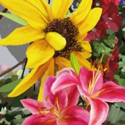 Sunflower, Lilies & HollyHocks (9x12,150)