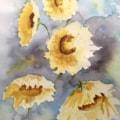Sunflowers IMG_0159