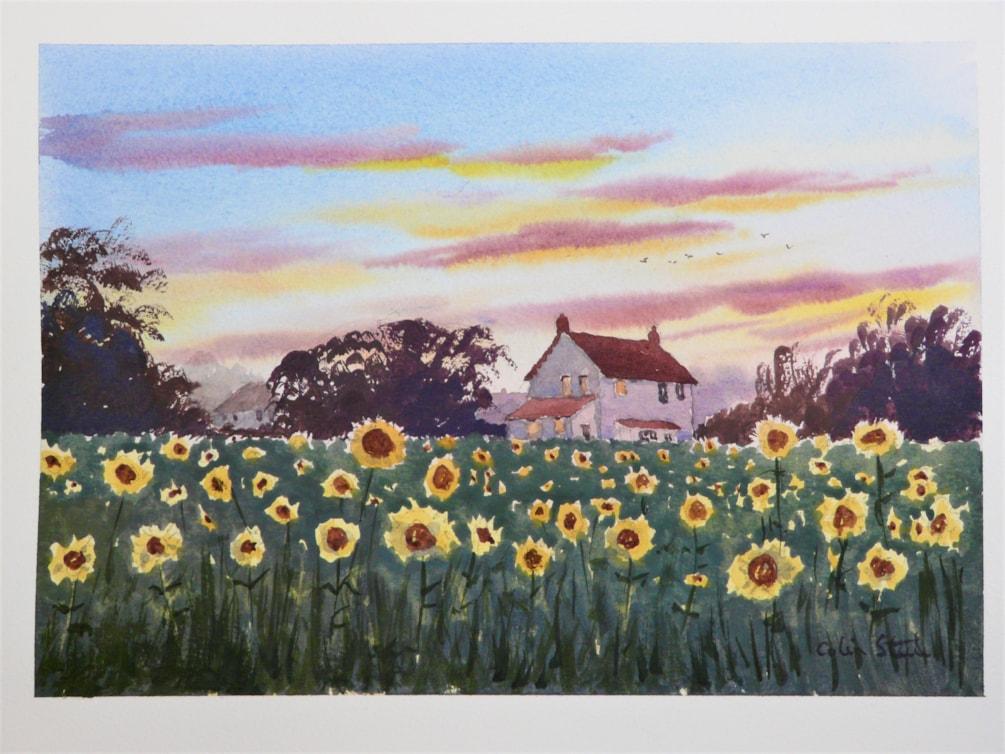 Sunflowers, Parklands Farm