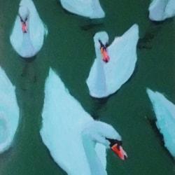 Swan Vista_LR