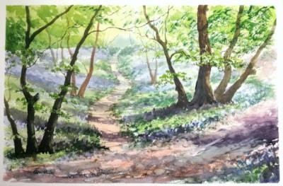 Swan Wood Bluebells