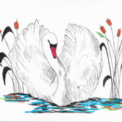 Swan and Reeds