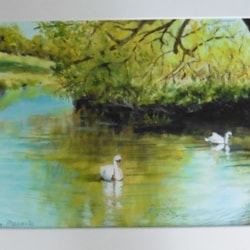 Swans at Grantchester