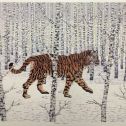 Taiga, tiger, by Margaret Mallows