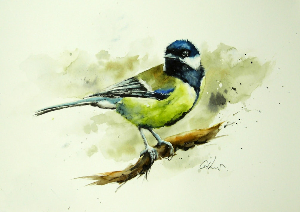 The Great Tit, watercolour by Graham Kemp.