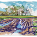 Thoresby Estate muddy fields