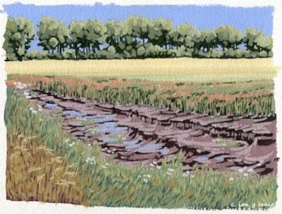 Thoresby Harvest