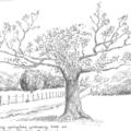 Tree near Ullock