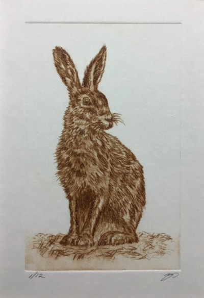 Watchful hare II by Margaret Mallows