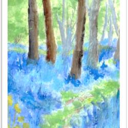 Where the bluebells grow