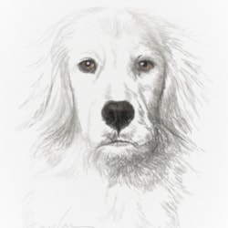 White Lab on White (9x12)