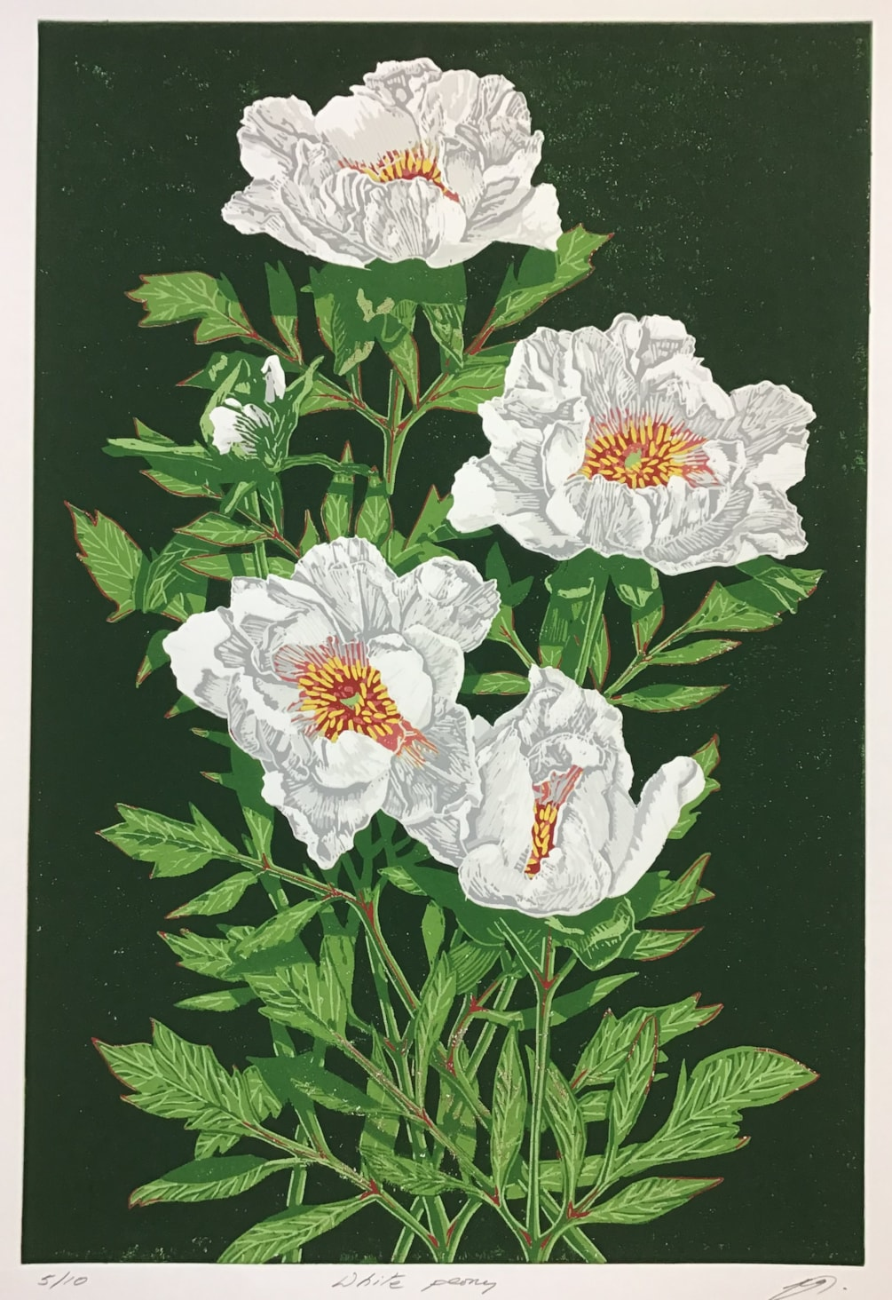 White peony on green by Margaret Mallows