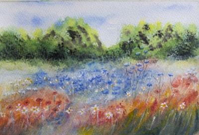 Wild flower meadow 72dpi