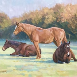 Winter morning, brood mares low res