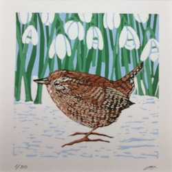 Wren and snowdrops by Margaret Mallows