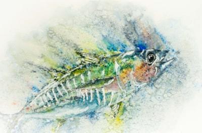 Yellow Fin Tuna '21-2