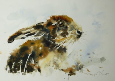 Young Hare, watercolour by Graham Kemp.
