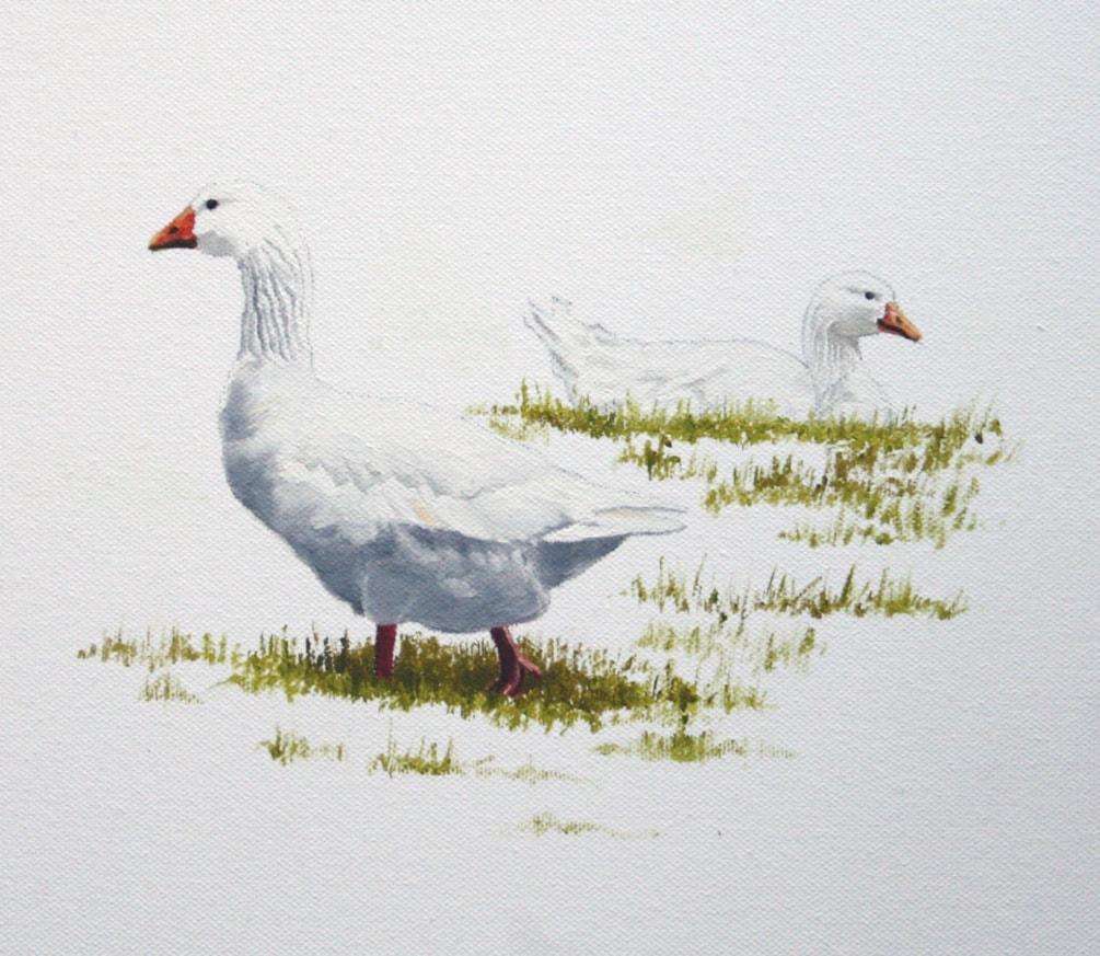 White Geese