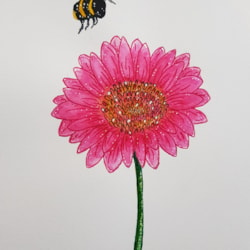The Pink gerbera and the Bee