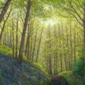 Bluebells Great High Wood