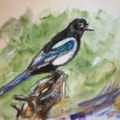 Another Magpie...