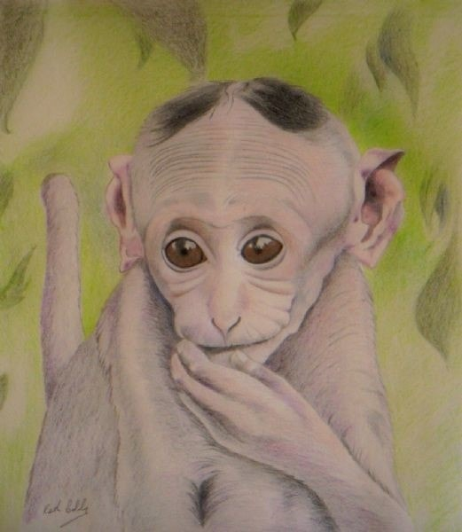 Gremlin, a Macaque monkey from Indonesia