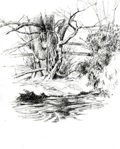 The Buzzard Tree