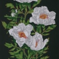 White peony - dark green background
