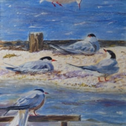 """""""Incoming!"""" (Common Terns at Saltholme)"""