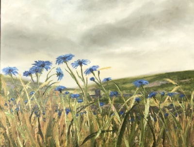 Cornflowers in the wind