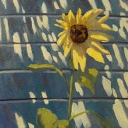 Midday Sunflower