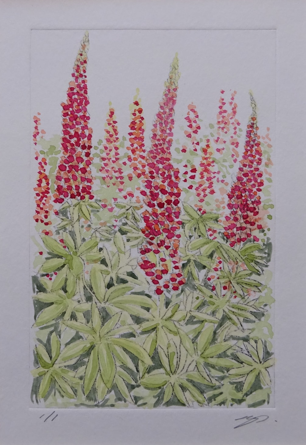 Cottage garden lupins - peach and red