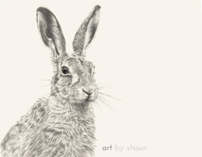 A Good Hare Day