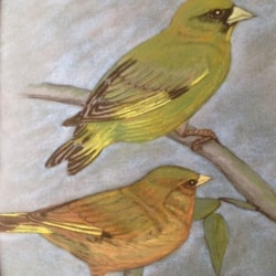 Two green finches