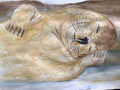 Let Sleeping Sea dogs Lay
