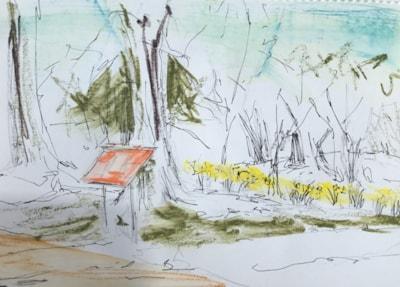 Spring Daffs, Batsford Arboretum.