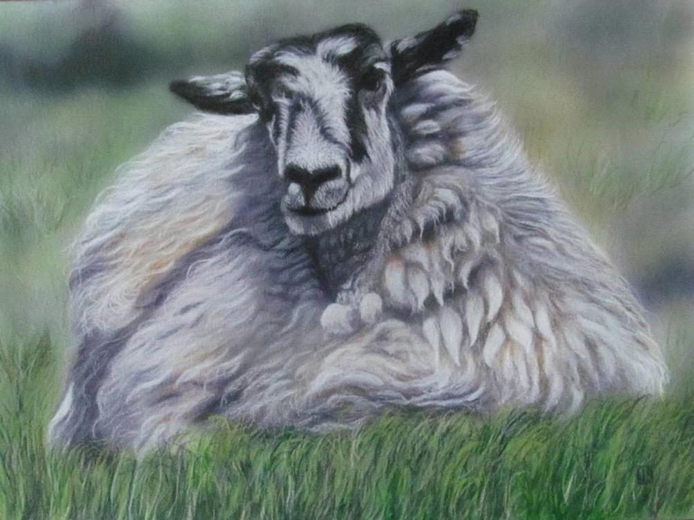 Ridgeway Sheep
