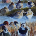 Ducks and waders - acrylic sketch