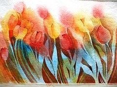 Tulips for Paula
