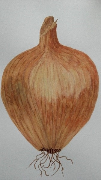 Onions Make you Cry