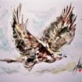 Aguila....