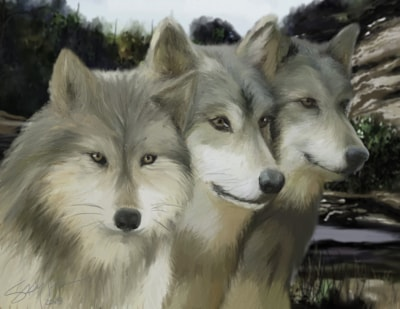 Three Gray Wolves