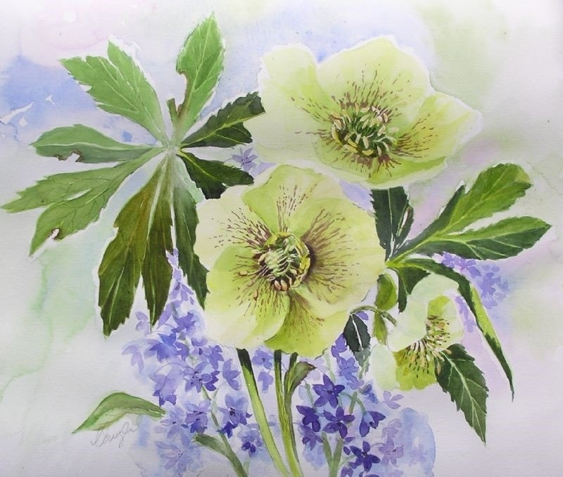 Hellebore and scilla